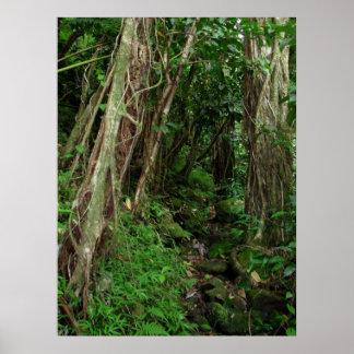 Trajeto na floresta tropical havaiana pôster