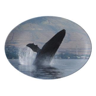 Travessa De Porcelana rompimento da baleia de humpback