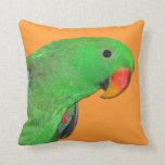Travesseiro decorativo masculino do papagaio de Ec