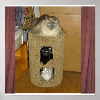 Três gatos posters