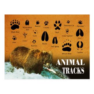 Trilhas animais cartão postal