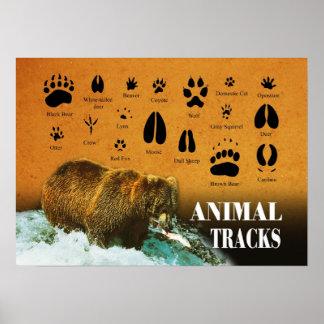 Trilhas animais posteres