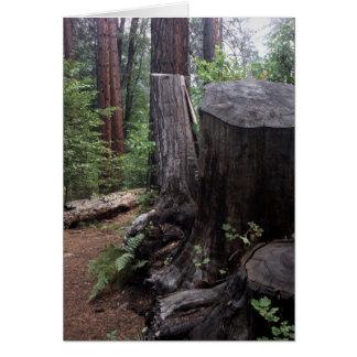 Tronco de árvore cartão comemorativo