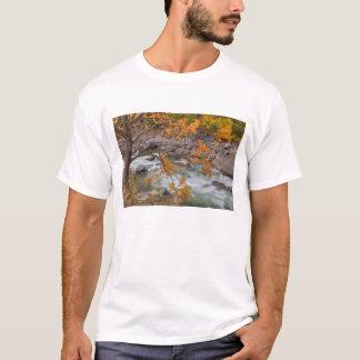 Tshirt WA, floresta nacional de Wenatchee, árvore de