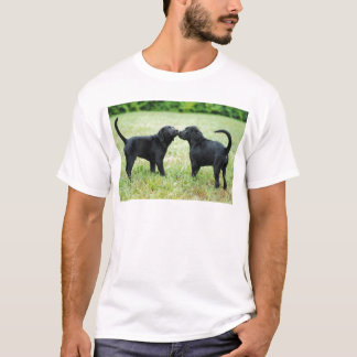 Tshirts Labrador retriever preto