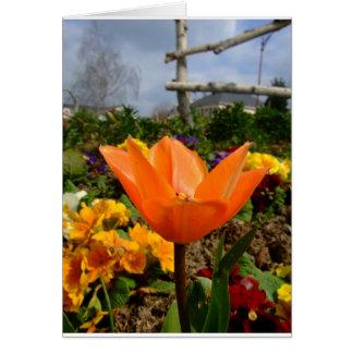 Tulipa alaranjada com nuvens cinzentas! cartoes