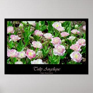 Tulipa Angelique Posteres
