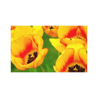 tulipa impressão de canvas esticada