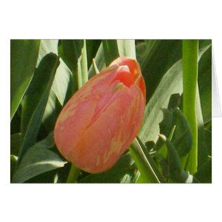 Tulipa do Central Park Cartão Comemorativo
