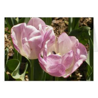 Tulipas roxas do Central Park Cartão Comemorativo