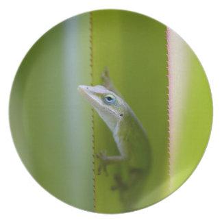 Um anole verde é um lagarto arboreal pratos de festas