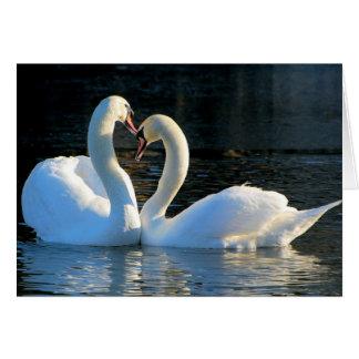 Um beijo do coração da cisne, reflexões do amor cartão comemorativo