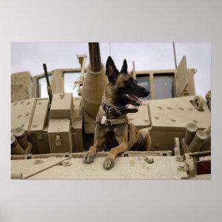 Um cão de funcionamento militar senta-se em um poster