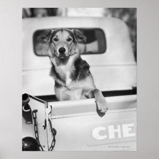 Um cão em um carro poster