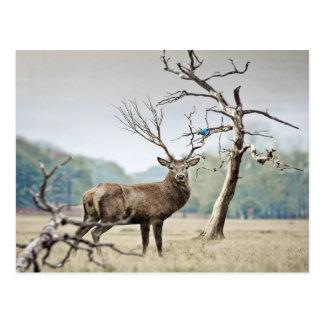 Um cervo e um Bluebird Cartão Postal