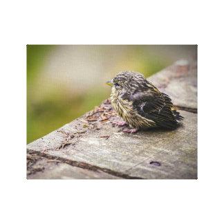 um pássaro pequeno impressão em tela