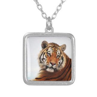 Um relance do lado dos tigres colar banhado a prata