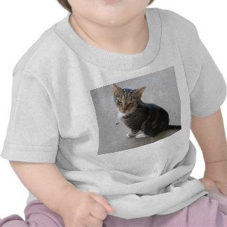 Um t-shirt do gato para sua criança