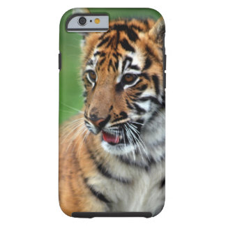 Um tigre de bebê bonito capa tough para iPhone 6