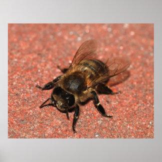Uma abelha do mel poster