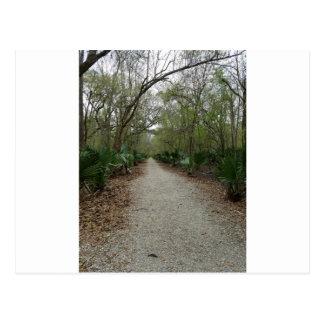 Uma caminhada na natureza cartão postal