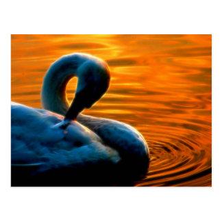 Uma cisne que toma uma última natação minúscula no cartão postal