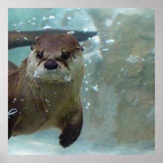 Uma natação bonito da lontra de Brown em uma Impressão