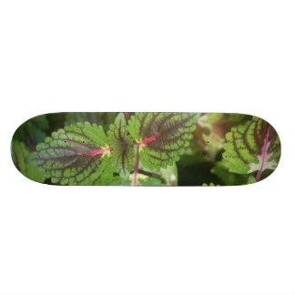 Ummm frondoso shape de skate 20cm