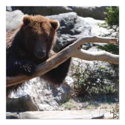 Urso de Brown de relaxamento Convite