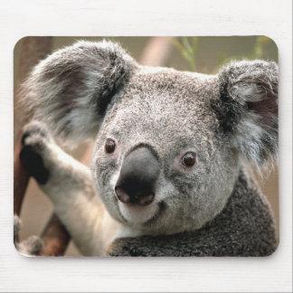 Urso de Koala bonito Mouse Pad