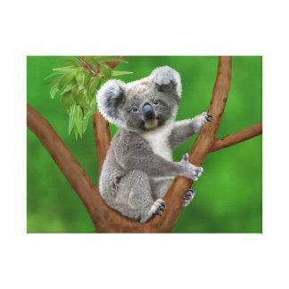 Urso de Koala de olhos azuis do bebê