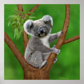Urso de Koala de olhos azuis do bebê Pôster