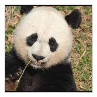Urso de panda gigante bonito convite quadrado 13.35 x 13.35cm
