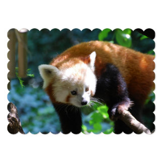 Urso de panda vermelha inquisidor convite 12.7 x 17.78cm