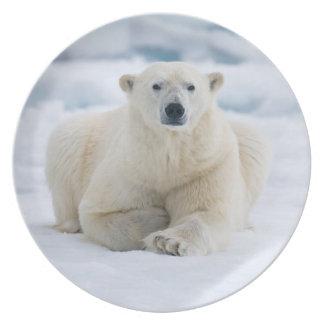 Urso polar adulto no gelo de bloco do verão pratos de festas
