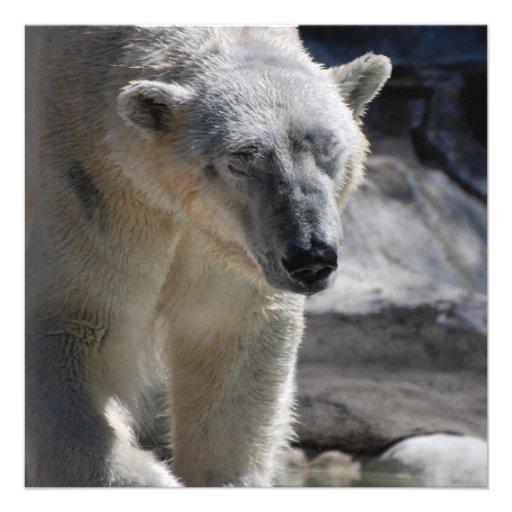 Urso polar branco bonito convites