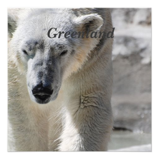 Urso polar convites personalizado