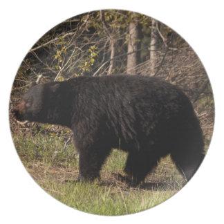 Urso preto carnudo de CBB Prato De Festa