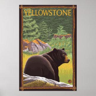 Urso preto na floresta - parque nacional de Yellow Pôster