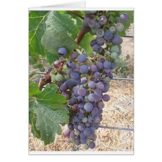 Uvas de Napa Valley Cartão Comemorativo