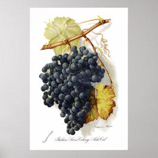 Uvas para vinho de CA do Mignon de Bosqui Poster