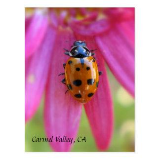 Vale de Carmel do joaninha, cartão de CA Cartão Postal