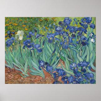 Van Gogh torna iridescentes as belas artes (F608) Poster