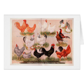 Variedade de galinhas cartão