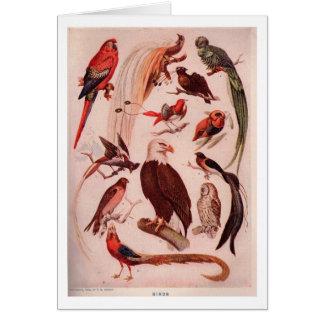 Variedades de pássaros cartão comemorativo