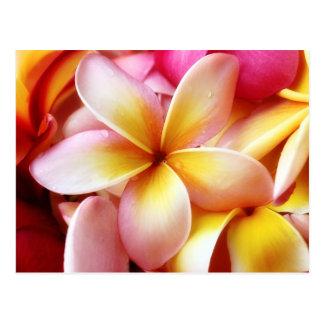 Vazio personalizado flor de Havaí do Frangipani do Cartão Postal