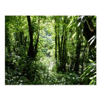 Verde tropical da floresta tropical II Cartão Postal
