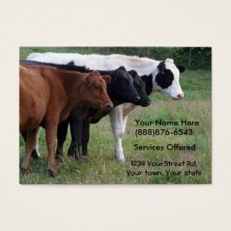 Veterinário dos gados bovinos ou cartão dos cartão de visita grande