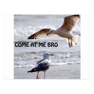 Vindo em mim bro! Versão da gaivota Cartão Postal