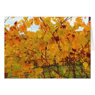 Vinhedo da região vinícola de Napa Valley Cartão Comemorativo